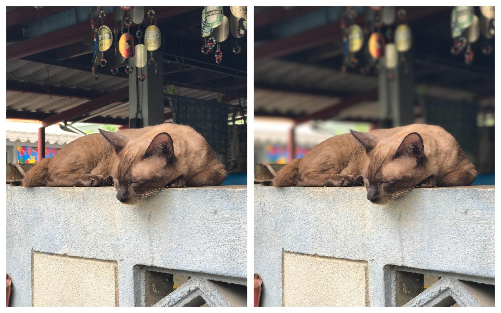 Cat-trait Mode